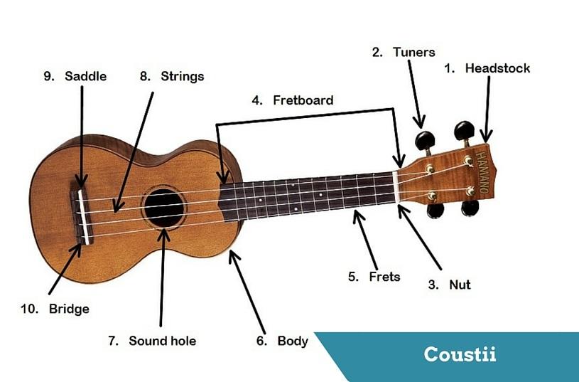 Uke Anatomy Parts Of A Ukulele Coustii